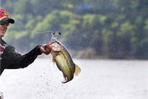 News & Tips: A Beginner's Guide To Tournament Fishing: Part 1 of 2...