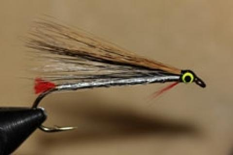 News & Tips: Tying the Black Nose Dace