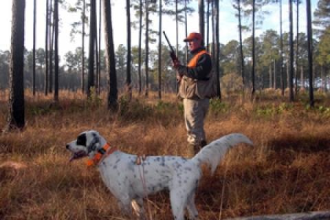 News & Tips: Gear Up for Bobwhite Quail Hunting