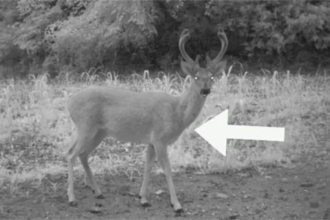 News & Tips: Deer Hunter's Guide to Aging Bucks Before the Shot  (video)...