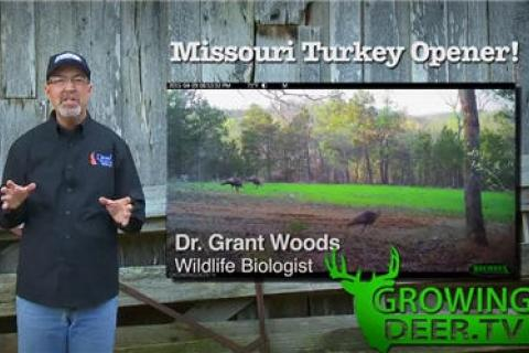 News & Tips: Turkey Hunting on the Move: 2 Gobblers Killed (video)...