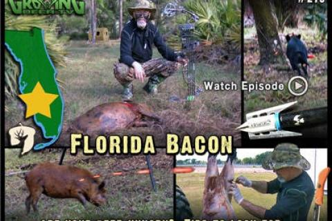 News & Tips: Bow Hunting: Sticking A Pig (video)