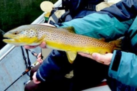 News & Tips: Early Spring Browns on the White River...