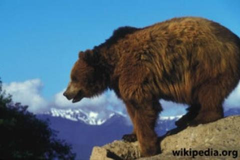 News & Tips: 5 Tips to Avoid Bear Encounters (and Attacks)...
