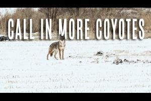 Call In More Coyotes – Midwest Predator Episode 1
