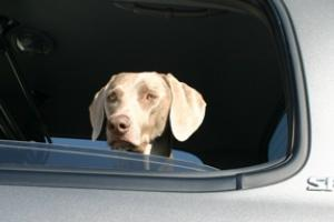 News & Tips: Tips to Keep Your Dog Safe When Hunting and Traveling...