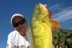 News & Tips: Travel Blog: Miami Peacock Bass Fishery...