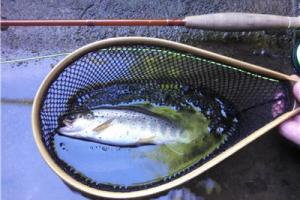 News & Tips: Fiberglass Fly Rods: A Trout Angler's Desire to Feel More of the Casting Action...