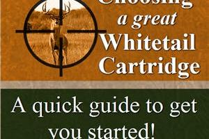 News & Tips: How to Choose Your Whitetail Cartridge (infographic)...