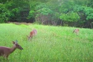 News & Tips: Valuable Habitat Lessons for Deer Hunters  (video)...