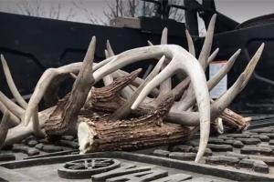 News & Tips: Shed Hunting Tips and Deer Habitat Improvements in Kansas  (video)...