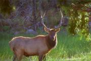 News & Tips: For the Best Elk Bow Hunting: Find Food, Cover & Water (video)...