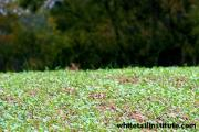 News & Tips: Food Plot Tips: Get Ready for Planting Season...